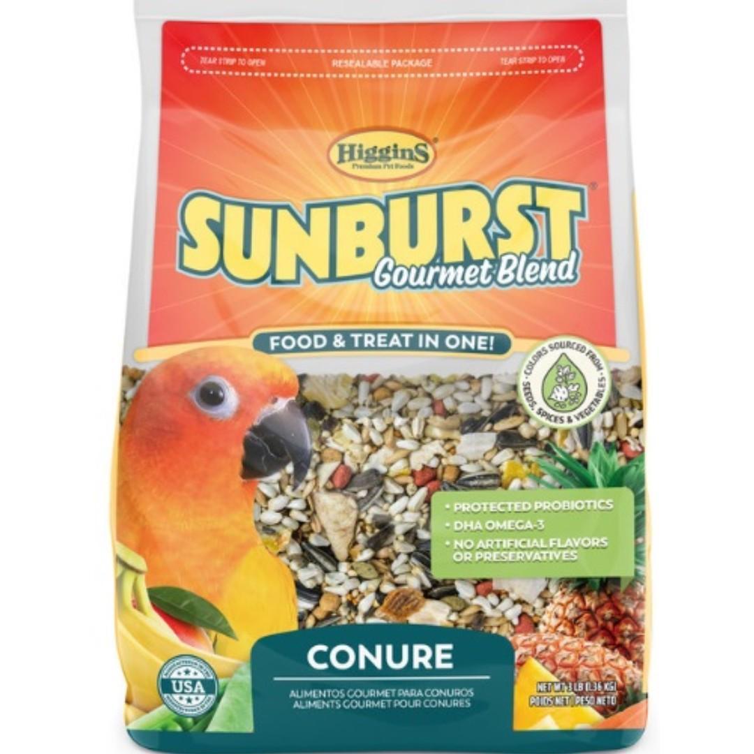 Higgins Sunburst Conure